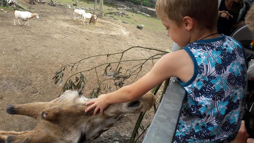 Petting the giraffe