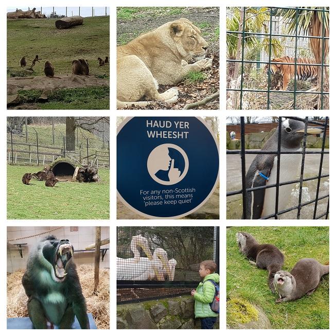 Edinburgh: Edinburgh Zoo